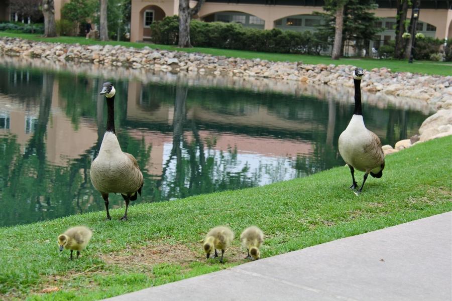 geesefamily