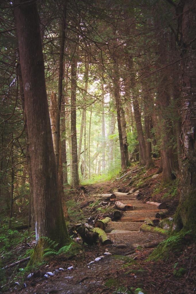 adirondackwoods1